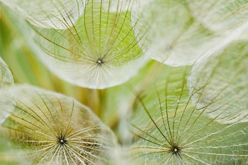 weeds farming pests