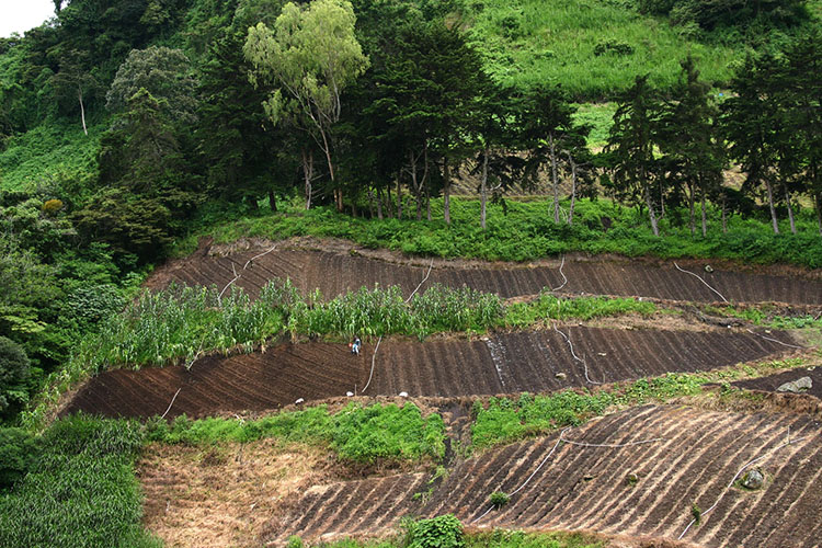 open field vegetable growing weed control