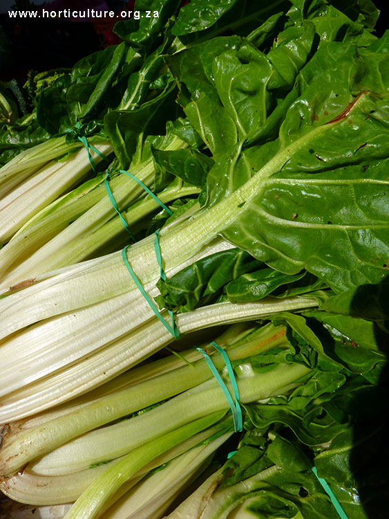 spinach informal marketing swiss chard south africa
