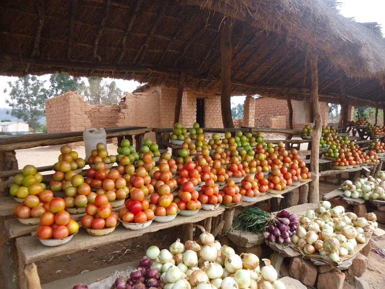 marketing horticultural vegetable products advice south africa