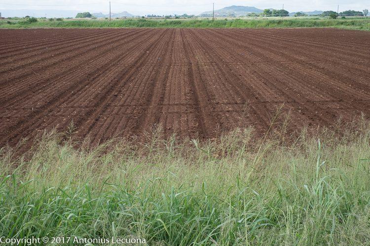 vegetable farming soil preparation