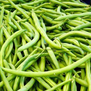common green bean phaseolus vulgaris