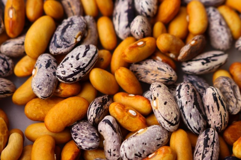 haricot dry bean legume green phaseolus