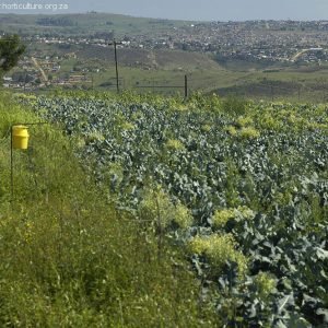 insect traps farming control disease pests
