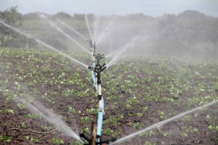 commercial farming sprinkler irrigation crop production water