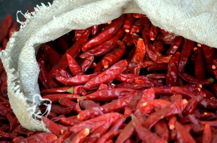 peppers chilli red hot farming growing know how to