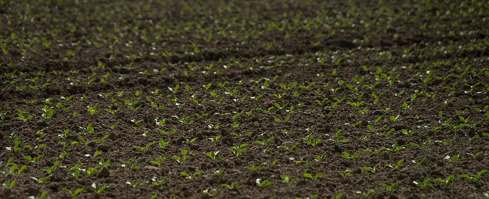 seedbed seedlings farming agriculture farming