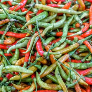 green red chillies diseases insect growing marketing