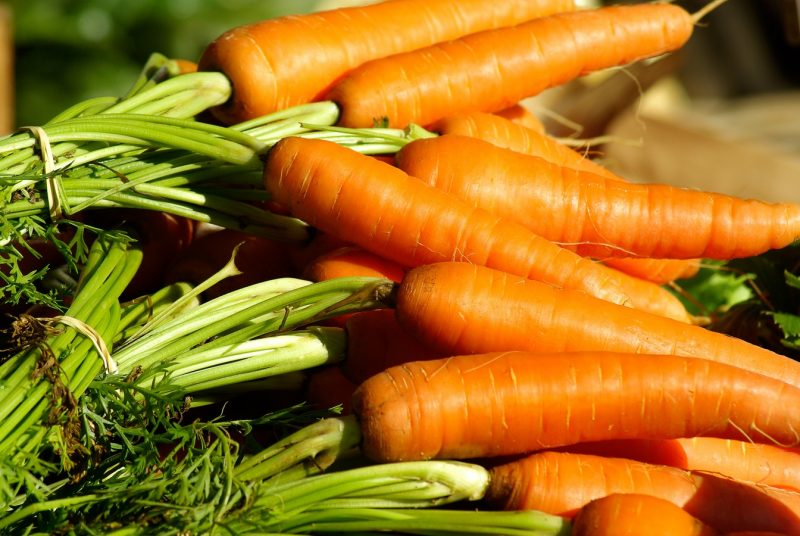 Carrot fresh market growing fertilizer requirement